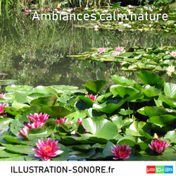 Ambiances calm nature
